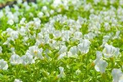 Κλείστε επάνω το όμορφο λουλούδι Στοκ φωτογραφία με δικαίωμα ελεύθερης χρήσης
