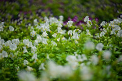 Κλείστε επάνω το όμορφο λουλούδι Στοκ εικόνα με δικαίωμα ελεύθερης χρήσης