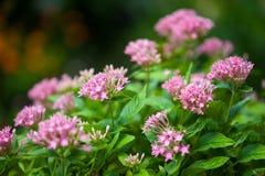 Κλείστε επάνω το όμορφο λουλούδι Στοκ εικόνες με δικαίωμα ελεύθερης χρήσης