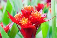 Κλείστε επάνω το όμορφο λουλούδι Στοκ Εικόνες