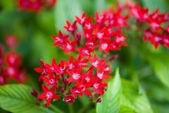 Κλείστε επάνω το όμορφο λουλούδι Στοκ Φωτογραφίες