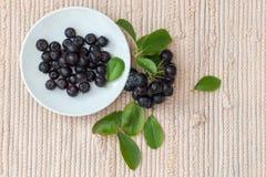 Κλείστε επάνω των μούρων & x28 melanocarpa Aronia μαύρο chokeberry& x29  με τα φύλλα στο άσπρο πιάτο Στοκ Εικόνα