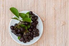 Κλείστε επάνω των μούρων & x28 melanocarpa Aronia μαύρο chokeberry& x29  με τα φύλλα στο άσπρο πιάτο Στοκ Φωτογραφία
