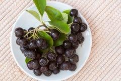 Κλείστε επάνω των μούρων & x28 melanocarpa Aronia μαύρο chokeberry& x29  με τα φύλλα στο άσπρο πιάτο στο κλωστοϋφαντουργικό προϊό Στοκ εικόνα με δικαίωμα ελεύθερης χρήσης