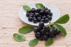 Κλείστε επάνω των μούρων & x28 melanocarpa Aronia μαύρο chokeberry& x29  με τα φύλλα στο άσπρο πιάτο Στοκ φωτογραφία με δικαίωμα ελεύθερης χρήσης