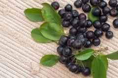 Κλείστε επάνω των μούρων & x28 melanocarpa Aronia μαύρο chokeberry& x29  με τα φύλλα Στοκ φωτογραφίες με δικαίωμα ελεύθερης χρήσης