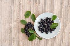 Κλείστε επάνω των μούρων & x28 melanocarpa Aronia μαύρο chokeberry& x29  με τα φύλλα Στοκ Εικόνες