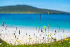 Κλείστε επάνω των λουλουδιών άνοιξη με την άσπρη αμμώδη παραλία Στοκ φωτογραφία με δικαίωμα ελεύθερης χρήσης
