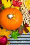Κλείστε επάνω των πορτοκαλιών φύλλων κολοκύθας, της Apple, σίτου και φθινοπώρου Στοκ Εικόνα