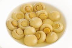 Κλείστε επάνω champignon των μανιταριών στο κύπελλο Στοκ εικόνα με δικαίωμα ελεύθερης χρήσης