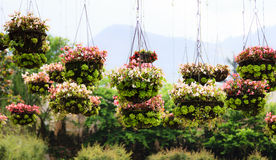 Flowerpots στο πάρκο Στοκ Εικόνες