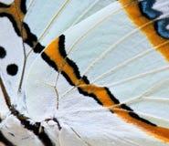 Κλειστά επάνω φτερά της πεταλούδας Στοκ Εικόνες