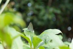 Κλειστή επάνω πεταλούδα στο fleaf με το υπόβαθρο bokeh Στοκ Φωτογραφία