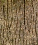 Κλειστός επάνω της κάθετης σύστασης του ξύλου σανίδων Στοκ φωτογραφία με δικαίωμα ελεύθερης χρήσης