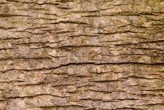 Κλειστός επάνω της οριζόντιας σύστασης του ξύλου σανίδων Στοκ Εικόνες