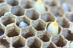 Κλειστός επάνω του αυγού σφηκών Στοκ εικόνα με δικαίωμα ελεύθερης χρήσης