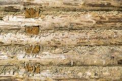 κλειστός τοίχος κούτσουρων σπιτιών σύνθεσης Στοκ εικόνες με δικαίωμα ελεύθερης χρήσης