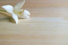 Κλειστό επάνω άσπρο ανθίζοντας λουλούδι Millingtonia στον ξύλινο πίνακα, με ελεύθερου χώρου για το κείμενο και το σχέδιο Στοκ Φωτογραφία