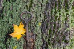 κλειδί με το φθινόπωρο sitem που βρίσκεται στο βρύο στο φλοιό Στοκ Φωτογραφίες