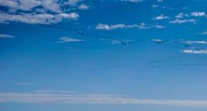 Κλειδαριά του πετάγματος πουλιών Στοκ Εικόνες