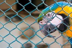 Κλειδωμένος παπαγάλος στοκ εικόνες με δικαίωμα ελεύθερης χρήσης