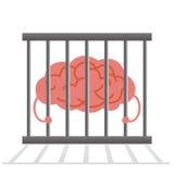 Κλουβί εγκεφάλου Στοκ Εικόνες