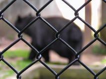 Κλουβί ζωολογικών κήπων Στοκ φωτογραφία με δικαίωμα ελεύθερης χρήσης