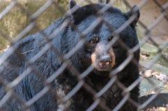 Κλουβί ζωολογικών κήπων Στοκ Φωτογραφία