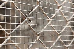 Κλουβί καθαρό Στοκ Εικόνα