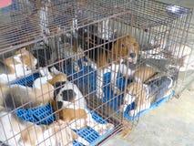 Κλουβί σκυλιών Στοκ εικόνες με δικαίωμα ελεύθερης χρήσης