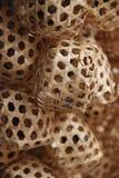 Κλουβιά γρύλων Στοκ Φωτογραφία
