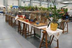 Κλουβιά πουλερικών σε Pollice Verde Στοκ φωτογραφία με δικαίωμα ελεύθερης χρήσης