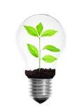 Λάμπα φωτός με το φυτό Στοκ Εικόνες