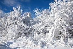 Λάμποντας άσπρο χιόνι στα δέντρα Στοκ φωτογραφία με δικαίωμα ελεύθερης χρήσης