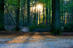 Λάμποντας δέντρα γουρνών ήλιων που πετούν τις ακτίνες Στοκ Εικόνες