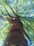 Λάμποντας δέντρο Στοκ Εικόνες
