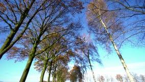 Λάμποντας δέντρα στο φως της ημέρας απόθεμα βίντεο