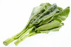 Λάχανο ή κινεζικό κατσαρό λάχανο Στοκ Εικόνες