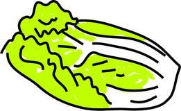 λάχανο κινέζικα απεικόνιση αποθεμάτων