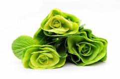 λάχανο κινέζικα Στοκ εικόνες με δικαίωμα ελεύθερης χρήσης