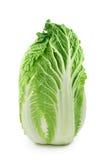 λάχανο κινέζικα Στοκ Εικόνες