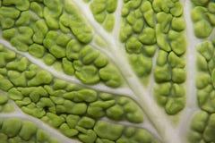 Λάχανο κραμπολάχανου στοκ φωτογραφία με δικαίωμα ελεύθερης χρήσης