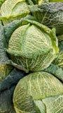 Λάχανο κραμπολάχανου στην υπεραγορά Στοκ Εικόνα