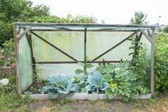 Λάχανο κραμπολάχανου Στοκ Εικόνες