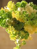 λάχανο πράσινο Στοκ φωτογραφίες με δικαίωμα ελεύθερης χρήσης