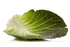 λάχανο πράσινο Στοκ Εικόνα