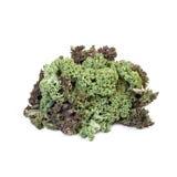 Λάχανο του Kale που απομονώνεται Στοκ φωτογραφίες με δικαίωμα ελεύθερης χρήσης