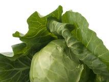 λάχανο φρέσκο Στοκ φωτογραφίες με δικαίωμα ελεύθερης χρήσης