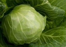 λάχανο φρέσκο Στοκ εικόνα με δικαίωμα ελεύθερης χρήσης