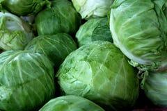 λάχανο Στοκ Εικόνα